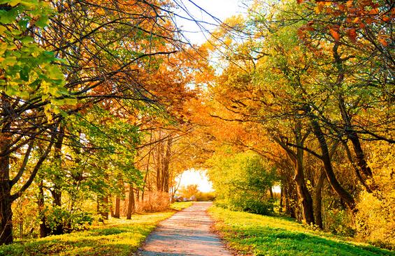 1、秋天很美,是一种特殊的美,美得让人陶醉,美得让你感知到了万籁俱寂的真正意境。秋天让人向往,让人明白时间就是金钱的道理。如果你勤劳耕耘,你就会迎来人生的秋天,收获秋天的果实。他们用特有的方式祝贺你的付出得到了回报。   2、秋天是大自然色调的真实展现,清新淡雅,果实成熟,金色的稻田。红色的枫叶,丰收的背后,体会到艰辛和汗水,使得这个季节更有韵味。   3、来到田野上,眼前立刻呈现出一幅美丽的画面,金色的水稻映入眼帘,水稻上结满了果实,沉甸甸的都把水稻压弯了。一阵微风吹过,金色的水稻随风摆动,犹如金