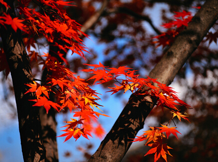 《描写秋天的故事素材大全》整理了关于秋天的诗句,描写秋天唯美
