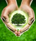珍惜资源、保护环境建议书